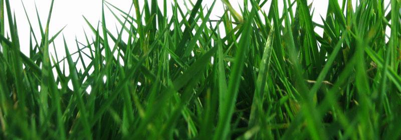 grass pasture improvement