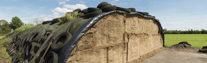 Silage for winter feeding out of cattle
