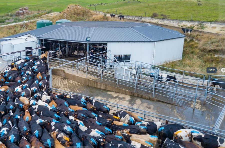 engineering dairy sheds