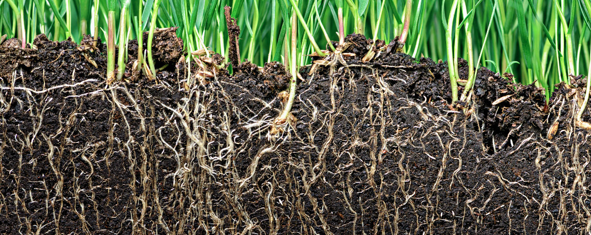 healthy soil for spring cultivation
